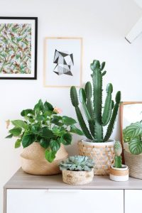 Cactussen accessoires in huis