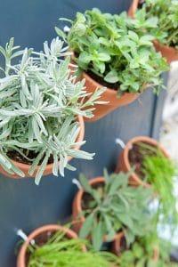 DIY Tuin Planten