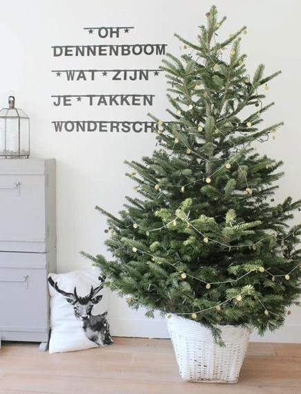 oh denneboom watzijn je takken wonder schoon